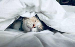 myth buster ; how to sleep well
