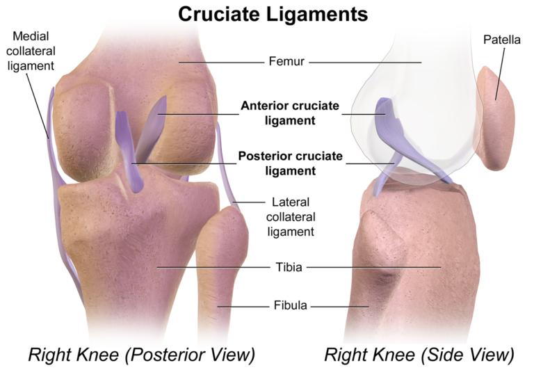 Cruciate_Ligaments tear diagnostic surgery & rehablitation